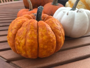 Perfectly formed Mini Pumpkin