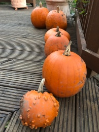 2018 Pumpkin Haul