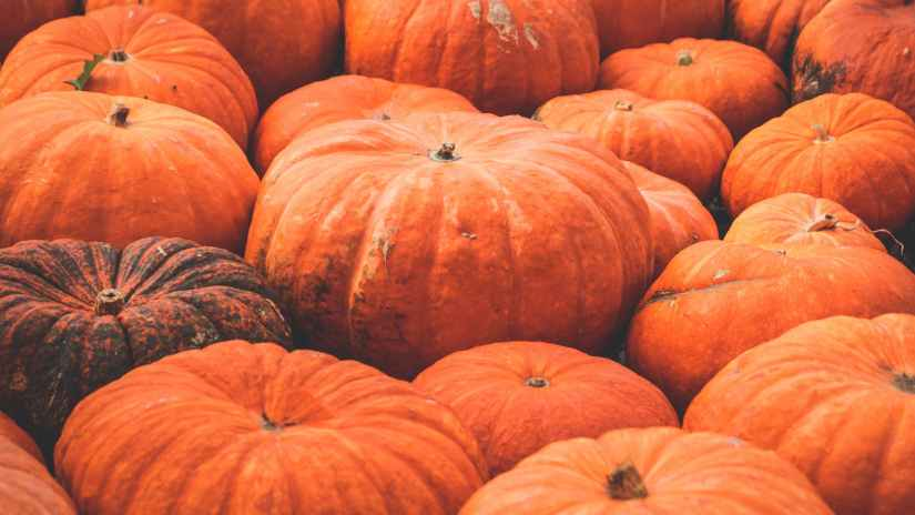 orange pumpkin lot