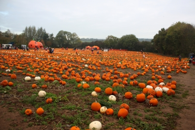 Maxeys Farm Shop Pumpkins
